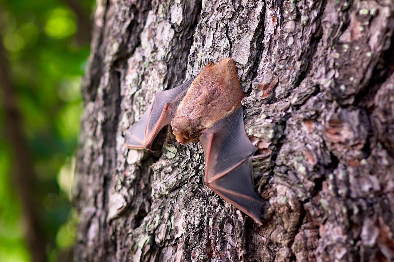 Come allontanare i pipistrelli
